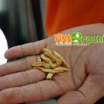 snack-chan-nam-vinaorganic2